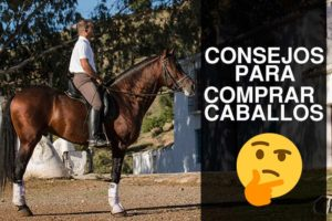 consejos para comprar un caballo