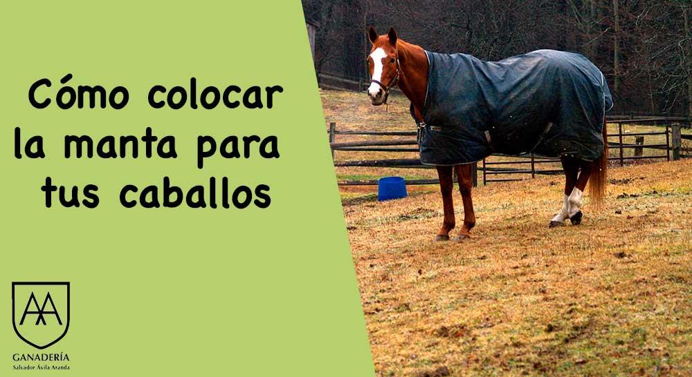 Como ponerle la manta al caballo