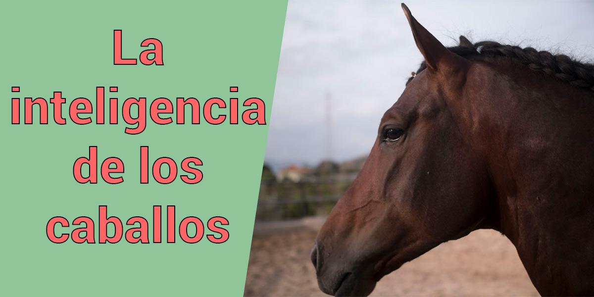 inteligencia de los caballos